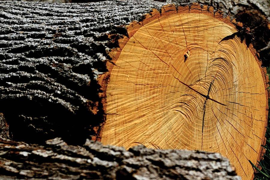 Identifying Timber